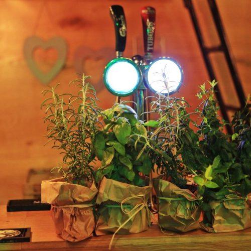 צמחי תבלינים לעיצוב שולחנות בחתונה קטנה